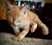 Nouveau chaton Images stock