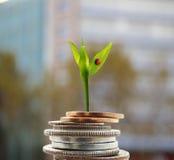 Nouveau concept d'argent de croissance Photo stock