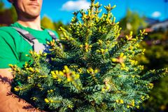 Nouveau Forest Planting photo libre de droits