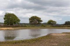 Nouveau Forest Pond, tranquille et paisible Images stock