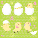 nouveau-né heureux de poulet Photos libres de droits