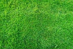 Nouveau terrain de jeu de nouvelle texture naturelle d'herbe verte Image stock