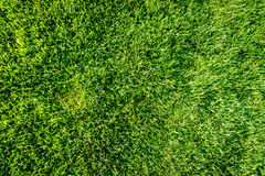Nouveau terrain de jeu de nouvelle texture naturelle d'herbe verte Images libres de droits