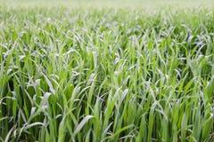 Nouveau terrain de jeu de nouvelle texture naturelle d'herbe verte Photo stock