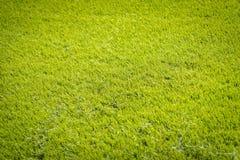 Nouveau terrain de jeu de nouvelle texture naturelle d'herbe verte Images stock