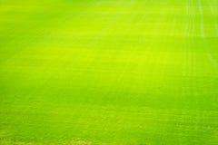 Nouveau terrain de jeu de nouvelle texture naturelle d'herbe verte Photos stock