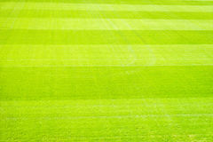 Nouveau terrain de jeu de nouvelle texture naturelle d'herbe verte Image libre de droits