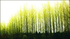 Nouveau vert Photographie stock libre de droits