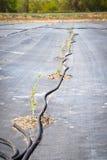 Nouveaux arbres s'élevant à une pépinière d'usine Photos libres de droits