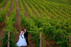 Nouveaux mariés embrassant dans une vigne photos stock