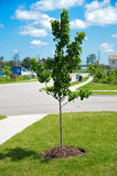 Nouvel arbre Images stock
