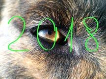 Nouvelle année 2018 Couleur jaune ; La bête est un chien ; Élément - la terre photos stock