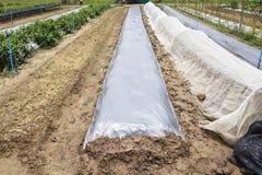 Nouvelle barrière de mauvaise herbe de bâches en plastique dans le jardin Images stock