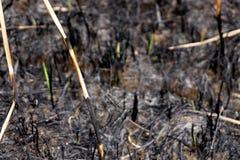 Nouvelle croissance chez Catherine Hill Bay une quinzaine après le feu massif photographie stock