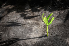 Nouvelle croissance d'arbre sur l'arbre mort comme concept d'affaires Images libres de droits
