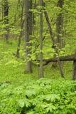 Nouvelle croissance de plancher de forêt de couverture d'usines Photographie stock libre de droits