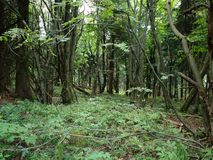 Nouvelle forêt vierge Photos libres de droits