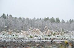 Nouvelle neige sur des arbres et des usines en automne en retard Images libres de droits