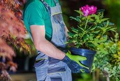 Nouvelle plantation de fleurs image libre de droits