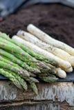 Nouvelle récolte de la saison blanche et verte de légume d'asperge au printemps, asperge grandissant de la terre à la ferme photographie stock