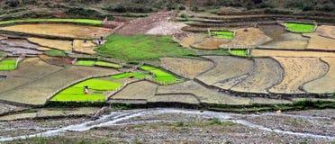 Nouvelle saison dans la rizière photographie stock libre de droits
