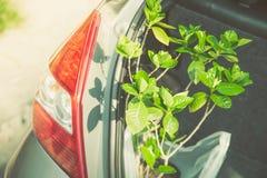Nouvelle usine dans la voiture, jardinage heureux dans le concept de vacances Photographie stock libre de droits