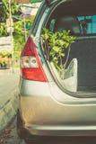 Nouvelle usine dans la voiture, jardinage heureux dans les vacances Image stock