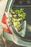 Nouvelle usine dans la voiture, jardinage heureux dans les vacances Photographie stock libre de droits