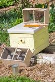 Nouvelles abeilles photos libres de droits