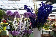 Nouvelles espèces d'arbre décoratif de fleur et de lilas d'ail Photographie stock libre de droits