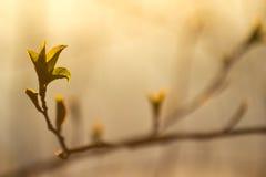 Nouvelles feuilles au printemps Image libre de droits