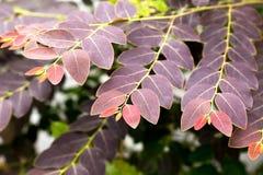 Nouvelles feuilles colorées de l'élevage d'usine Image stock