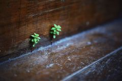 Nouvelles feuilles du plancher images stock