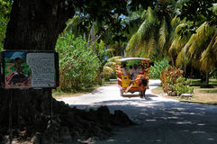 Nouvelles jeunes mariées à l'île Seychelles de digue de La Images libres de droits