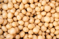 Nouvelles petites pommes de terre Photographie stock