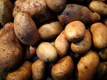 Nouvelles pommes de terre non lavées récemment récoltées de saison des Cornouailles Photos libres de droits