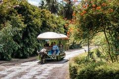 Carabao cart ride Villa Escudero, Tiaong, San Pablo, Philippines. NOV 24, 2012 San Pablo, Philippines : Carabao cart ride or buffalo cart at Villa Escudero royalty free stock photo