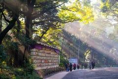 21 nov. , Tokyo, Japan - van de Ochtendzonneschijn/Zon stralen het stromen Stock Foto's