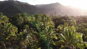Nova Caledônia Yate que aumenta através das palmeiras filme