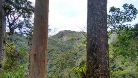Nova Friburgo - Rio de Janeiro - il Brasile immagini stock libere da diritti