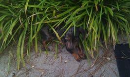 Nova In la jungle Photos stock