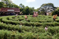 Nova Petropolis Brésil de labyrinthe de jardin Images stock