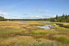 Nova Scotia Marsh Stock Photography