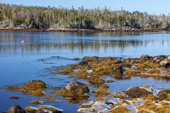 Nova Scotia Shoreline Stock Foto's