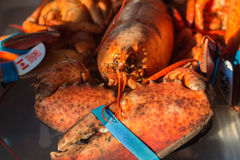 Nova Scotian lobster. Closeup of lobster from Nova Scotia Stock Image