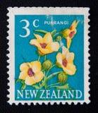 Nova Zelândia cerca da imagem das mostras de flores do puarangi, cerca de 1979 Imagem de Stock Royalty Free