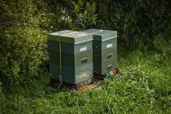 Nova Zelândia Honey Bee Hive imagem de stock royalty free