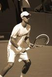 Novack Djokovic Stock Image