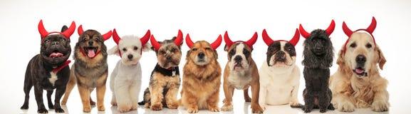Nove diabos pequenos bonitos que arfam junto fotos de stock