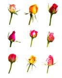 Nove flores cor-de-rosa no fundo branco Imagens de Stock Royalty Free